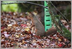 31-10-2012_09_42_30_0397-Kippford holiday prk