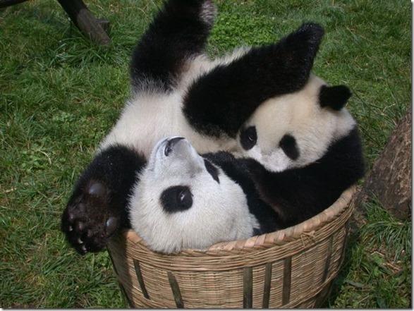 funny-animals-cute-45