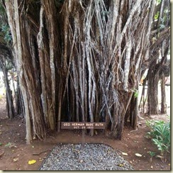 20150118_Babe Ruth banyan tree-1 (Small)