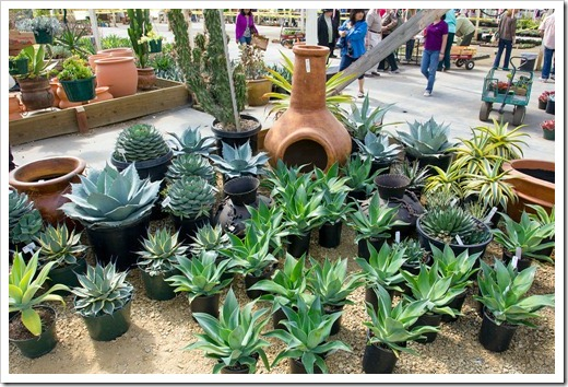 120928_SucculentGardens_chimenea- -agaves