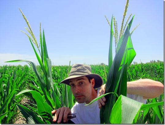 uncool-in-the-corn