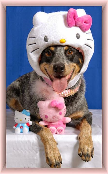 hello-kitty-face-dog.jpg