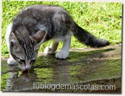 Enfermedades contagiadas por los gatos, mitos y realidades.
