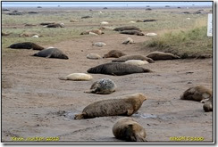 Donna Nook Seal Rookery