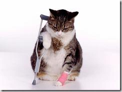 gatto con dolore