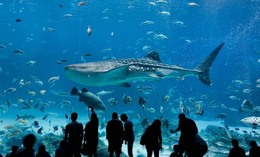 Assez Georgia Aquarium: The Largest Aquarium in the World | Amusing Planet XB65