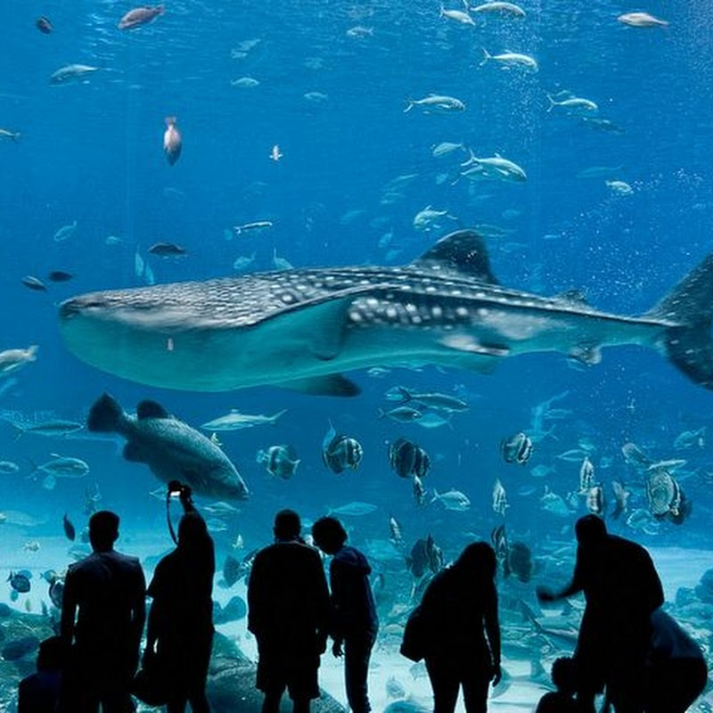 Georgia Aquarium: The Largest Aquarium in the World