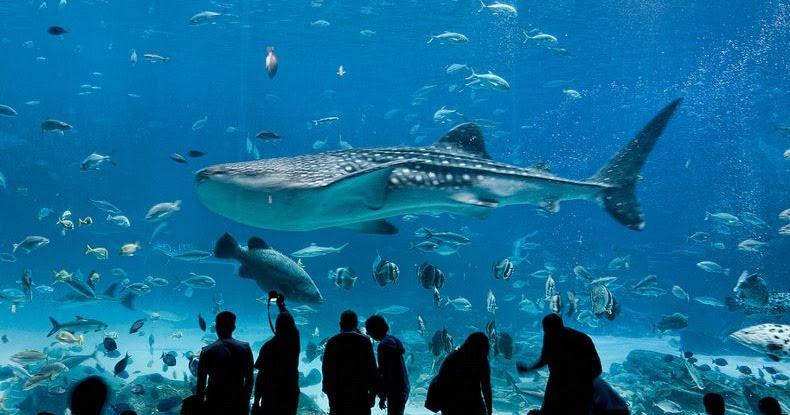 Georgia Aquarium: The Largest Aquarium in the World ...