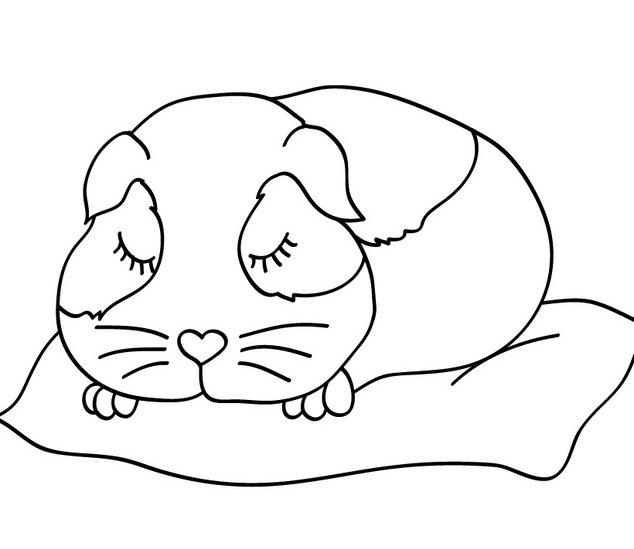 coloring pages of guinea pigs - colorear dibujos de hamsters