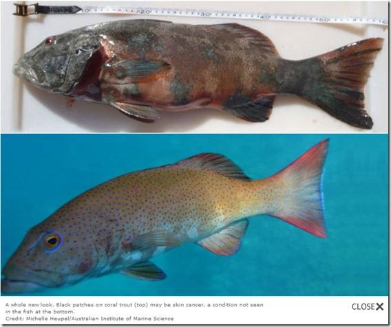 peces con cancer de piel
