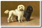 poodles-graphicsfairy012