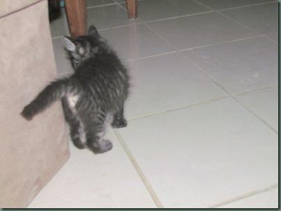 kitten butt