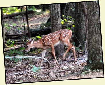 01d - Morning walk - Fawn