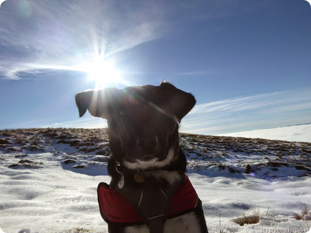 lucky on cross fell