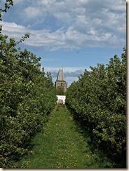 Wilderen: de kerk tussen de bomenrijen van een plantage gezien (foto genomen met polarisatiefilter)