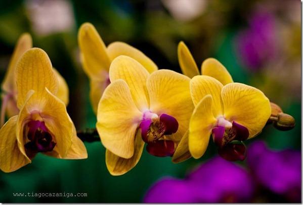 flores-facebook-tumblr-rosas-las flores-fotos de flores-763