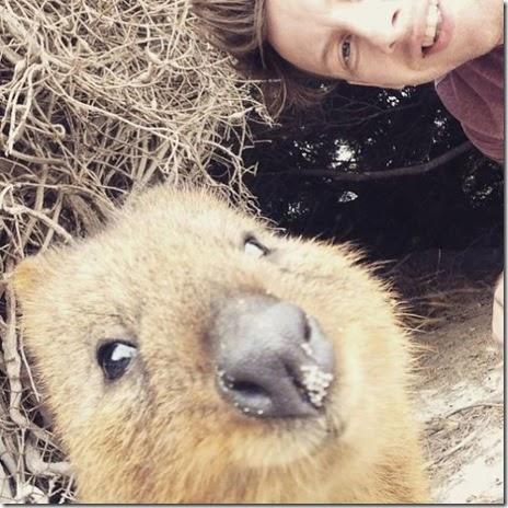 selfies-australian-quokka-010