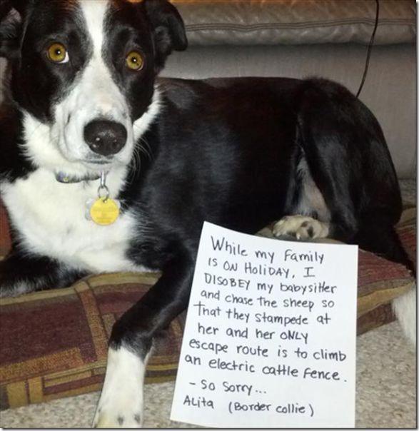 dog-shaming-bad-11