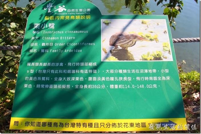 花蓮-理想大地渡假村-豐之谷生態公園(栗小鷺)