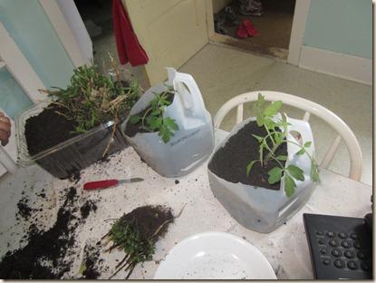 potting plants 062