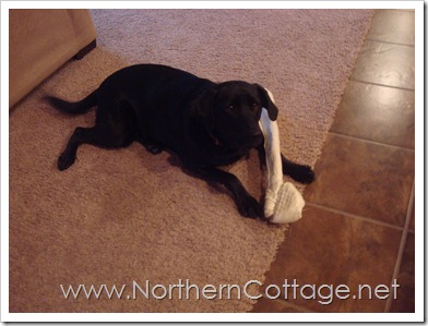puppy bone@NorthernCottage.net