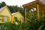 The Lush Gardens of Romney Manor - Basseterre, St. Kitts