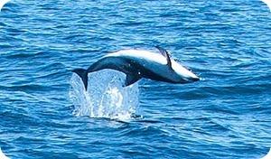 delfin4