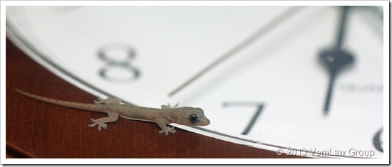 Gecko_Time_2_22213_IMG_7524