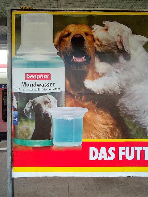 Ready Made Street Art Hunde Mundwasser
