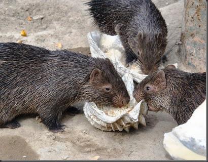 porcupines Calauit Safari park