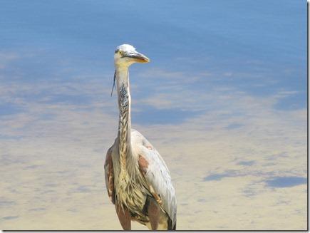Bird 04-25-12a