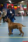 20130511-BMCN-Bullmastiff-Championship-Clubmatch-1679.jpg