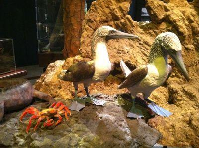 Darwin.exhibit.3.jpg