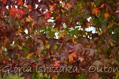26 - Glória Ishizaka - Folhas de Outono