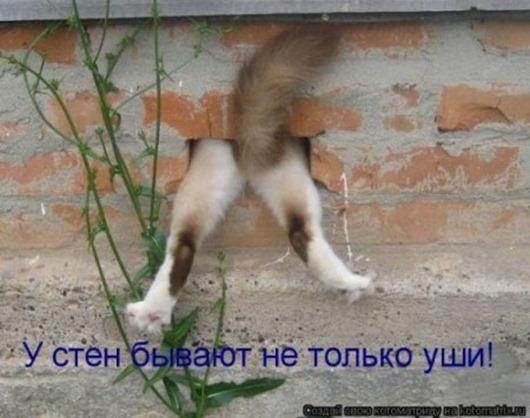 1336767175_1336111033_kotomatricy_010