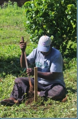 Hiva digging