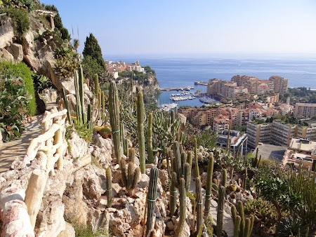 11. Cactusi in Monaco.JPG