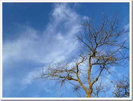 111231_tree_silhouette_13