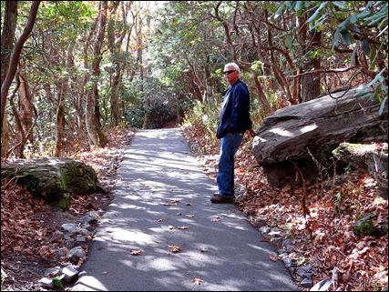 trail at Brasstown bald