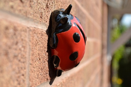 Potted ladybird