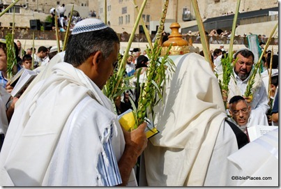 Man with four species of Sukkot at Western Wall, tb100906953
