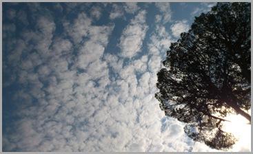 borreguitos en el cielo