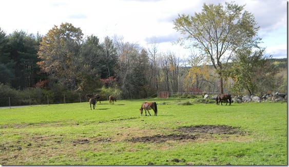 Fall at Jean's with horses. 071