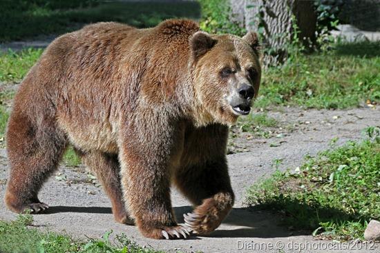 IMG_9157 GrizzlyBear