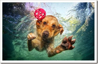 underwater-photos-of-dogs-seth-casteel-8