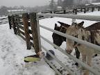 Well, you donkeys must have a strong constitution to be able to stay out here all day long!