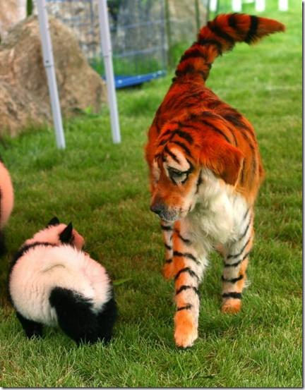 animales teñidos (3)