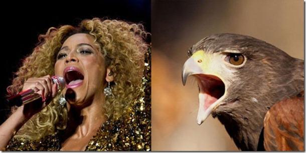 pop-stars-birds-4