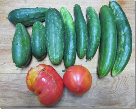Cucumbers and Big Rainbow tomatoes