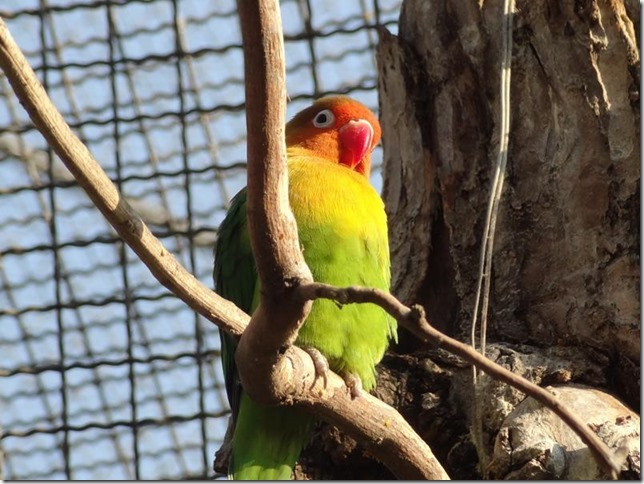 Santiago_Zoo_DSC03706